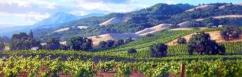 JUNE CAREY - Escena de Viñas